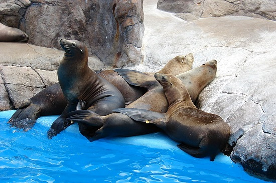 Sealions SeaWorld SanAntonio Texas
